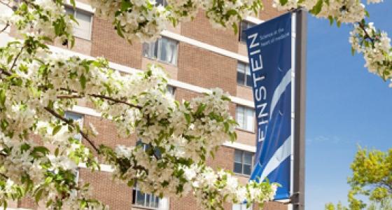 Albert Einstein College of Medicine